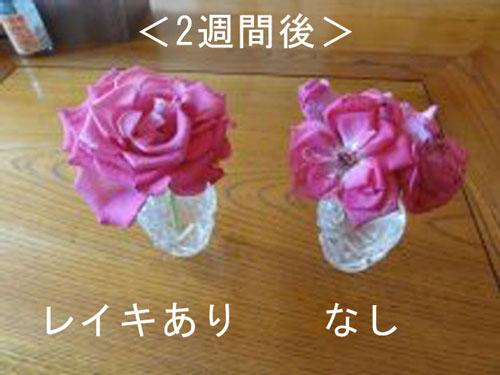 お花実験01
