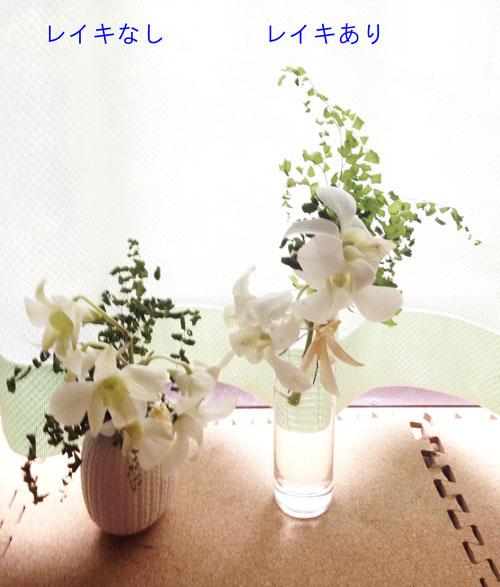 お花実験2